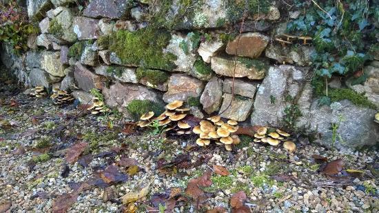 Domaine de Kerdréhan : mur d'automne