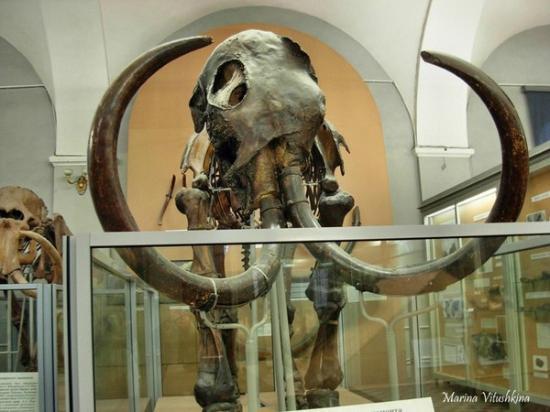 Картинки по запросу Скелет мамонта, фото скелета мамонта
