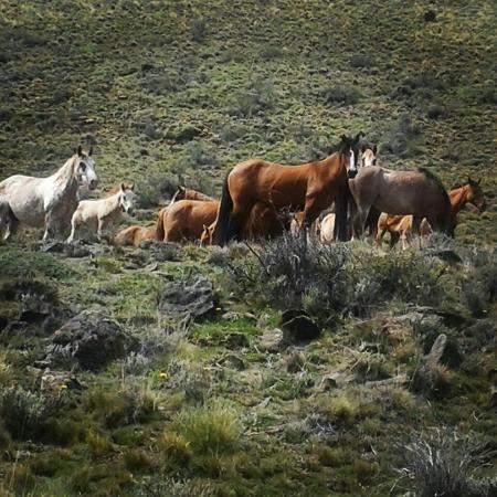 Safari Experience - Patagonia Profunda: Caballos salvajes