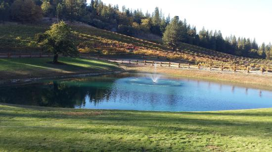 Somerset, Californie : Beautiful pond on the property
