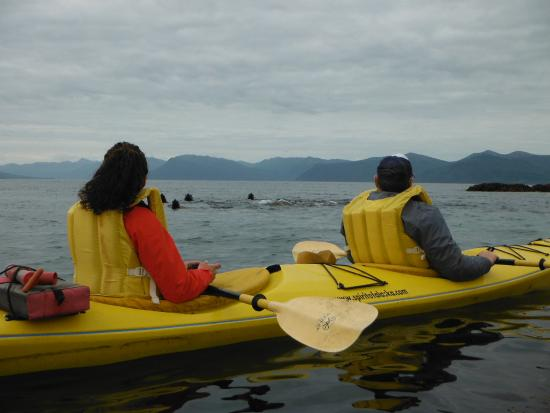Spirit of Alaska Wilderness Adventures Lodge: Kayaking with sealions.