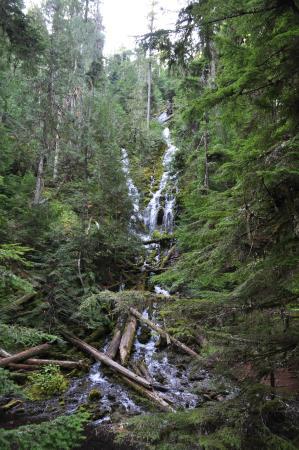 McKenzie Pass-Santiam Pass loop: Proxy Falls