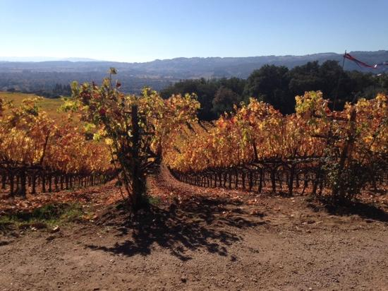 B. Wise Vineyards : The view while relaxing outside the cave