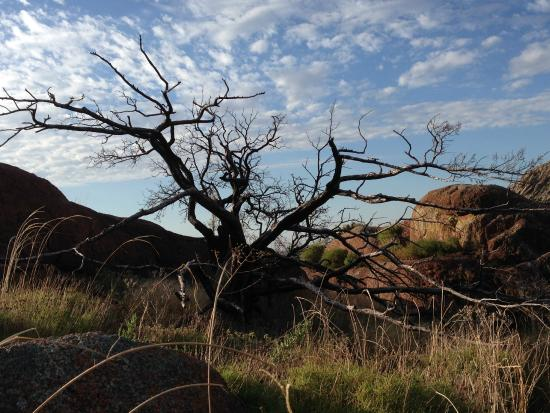 Lone Wolf, Оклахома: Majestic Tree