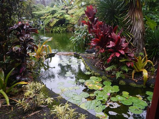 Chalet Kilauea: Landscaping/Pond was Beautiful