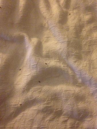 Ramada Plaza Rochester Airport: Ants in My Bed