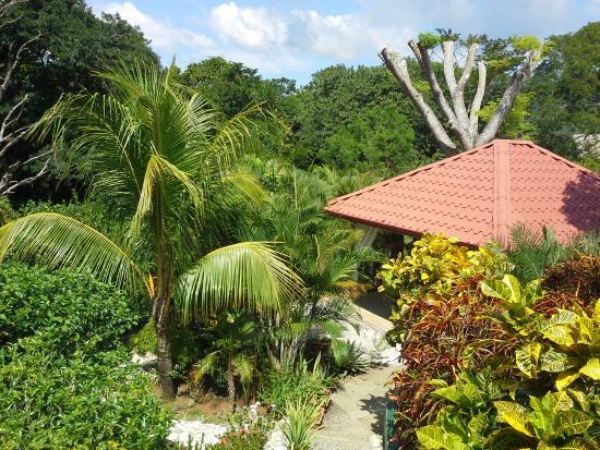 Casa Buenavista: Garden