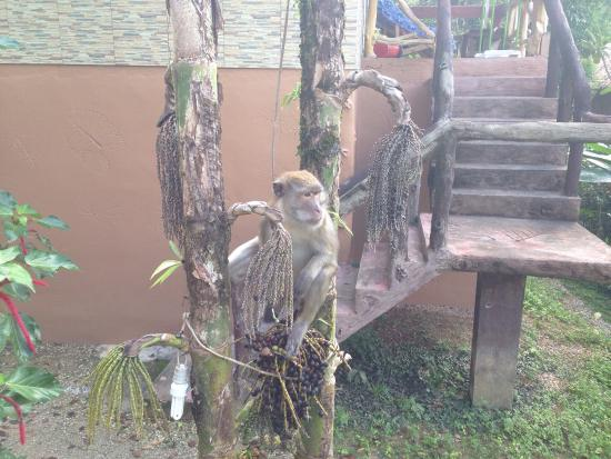 Morning Mist Resort : Monkeys in the morning. They also really like the rubbish bins on the balcony