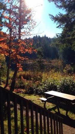 Cusheon Lake Resort: view from the cabin, afternoon, fall