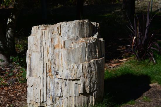 Petrified Forest: Petried Wood