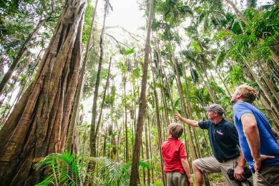 Southern Cross 4WD Tours: Guided Rainforest Walks