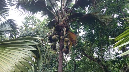Regardez dans les arbres photo de jardin botanique de for Jardin botanique singapour
