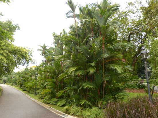 V g tation tropicale picture of singapore botanic for Au jardin singapore botanic gardens