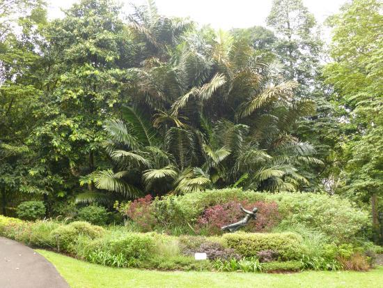 Palmier photo de jardin botanique de singapour for Jardin botanique singapour