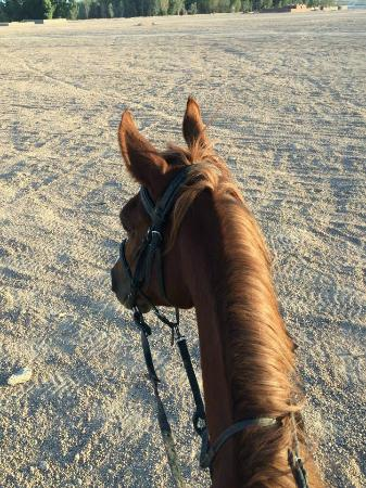 Sharm Horse Riding Sayed Abo Elrgal