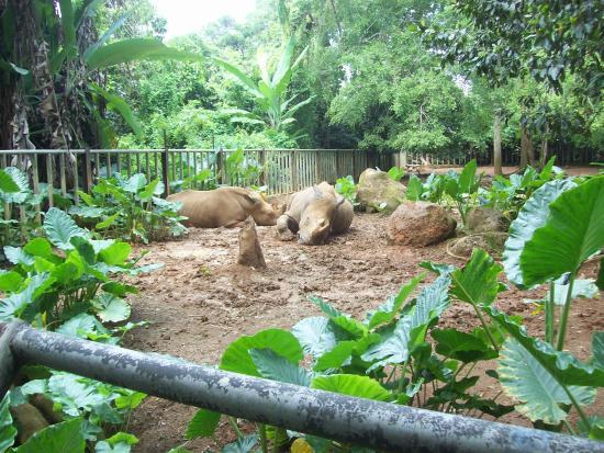 Malacca Zoo: Badak bercula 2