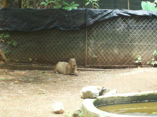 Malacca Zoo: Apa ya namanya?