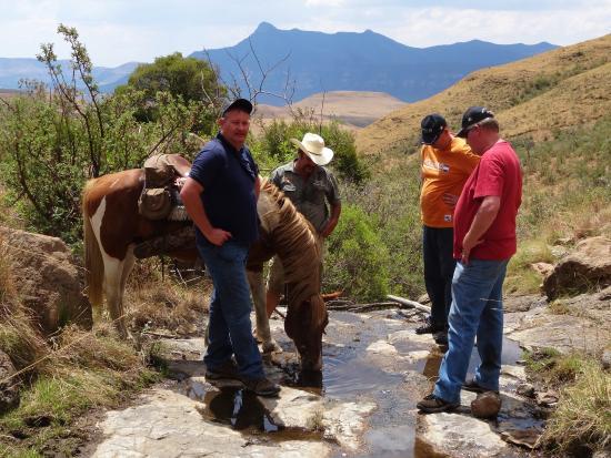 Bokpoort Cowboy Ranch: Horseriding