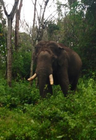 Pachyderm Palace: Elephant