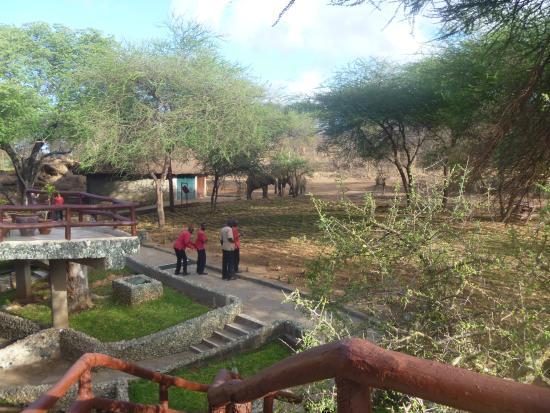 Tarangire Sopa Lodge: Elefanti fronte camera