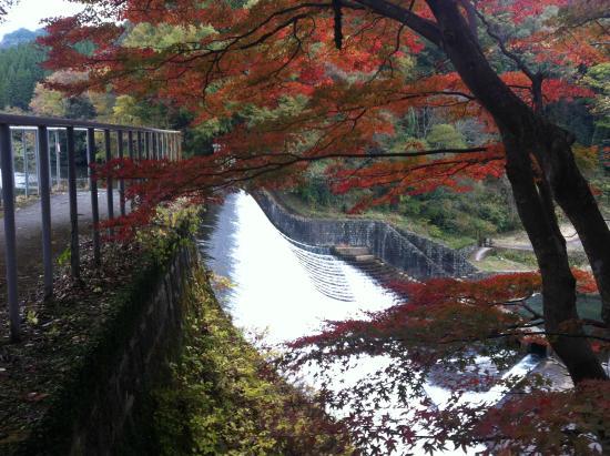Hakusui Dam: ちょうどそばの楓が紅葉していました
