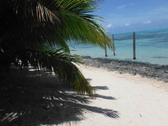 Pension Teataura : The beach