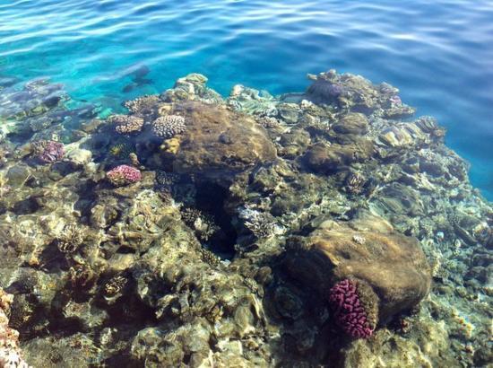 Arabia Azur Resort: Коралл у Марины