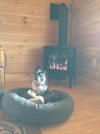 Muddy Moose: My pups loved sitting in front of the fire
