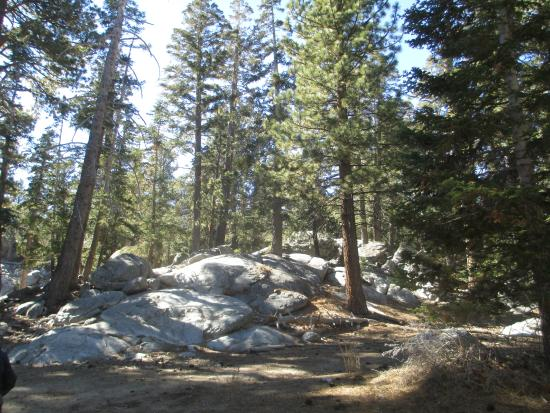 Mount San Jacinto State Park and Wilderness: Views from easy loop trail.