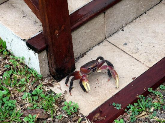 Hilton Seychelles Labriz Resort U0026 Spa: Krabbe Bei Der Villa Treppe