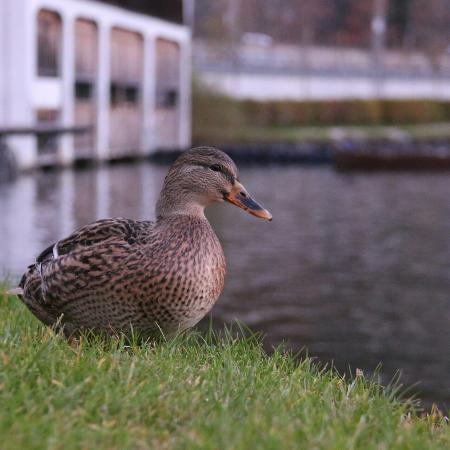 Seevilla Freiberg: The lovely ducks in front of the room