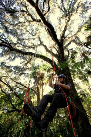 Canopy Climbers: Owner Danny Lyons, showing us the ropes.