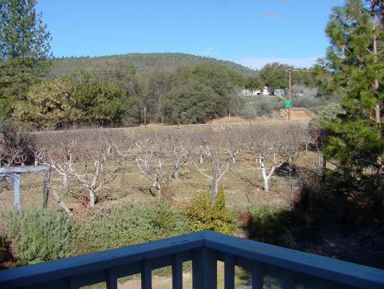 Yosemite's Apple Blossom Inn: View of the orchard