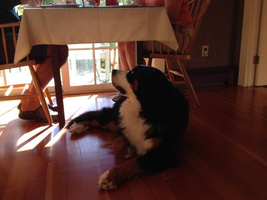 The Notchland Inn: One of the owners' Bernese mountain dogs. So friendly!