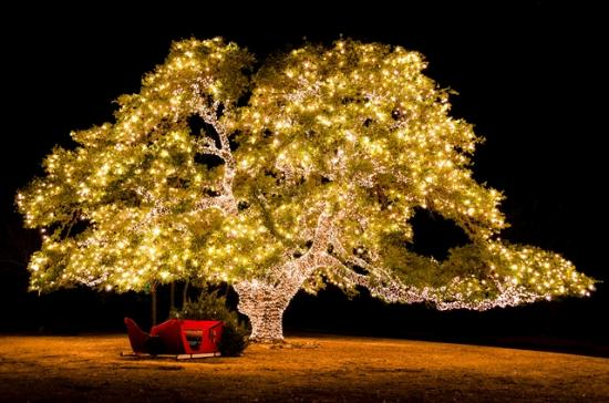 Cedar Park, TX: Light up the Holidays