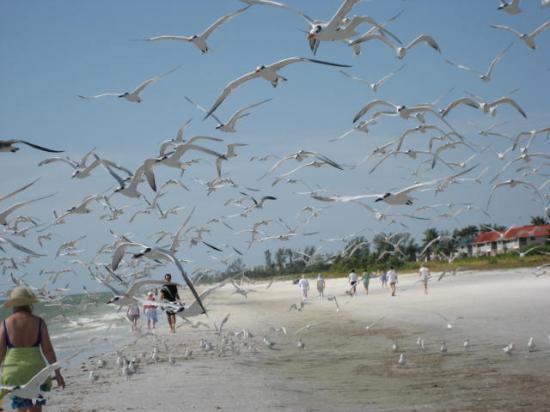Sandalfoot Condominium: Lots of birds