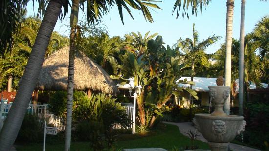 Parliament Inn: Blick von Terrasse in den Garten und Tiki-Bar