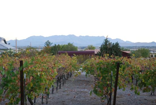 Pahrump Valley Winery: another variety