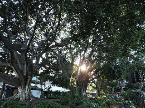 Plaza de la Constitucion : Parque Central...