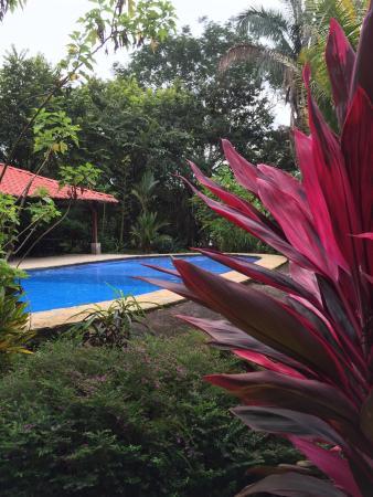 Hotel Casacolores : La piscine