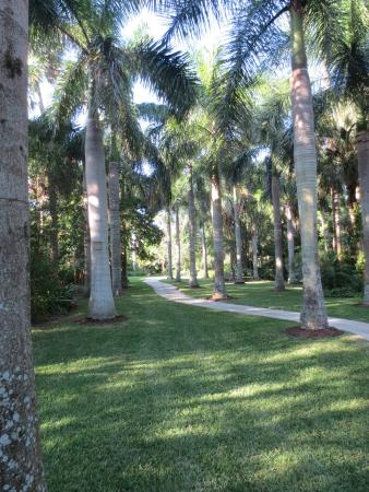 Royal Palm Grove - Picture of McKee Botanical Garden, Vero Beach ...