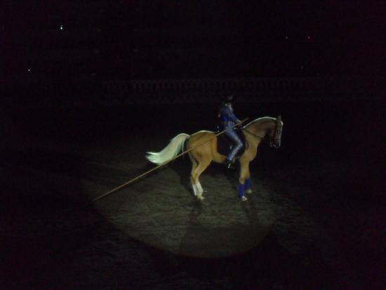 Arabian Nights Dinner Attraction: Apresentação solo de um cavalo