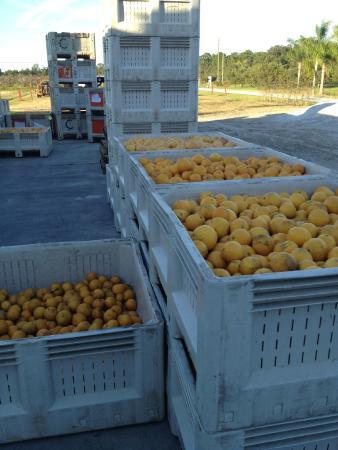 Countryside Citrus