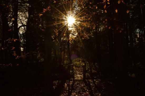 Craigtoun Meadows Holiday Park: Early Autumn sunrise in the Woodland Walk