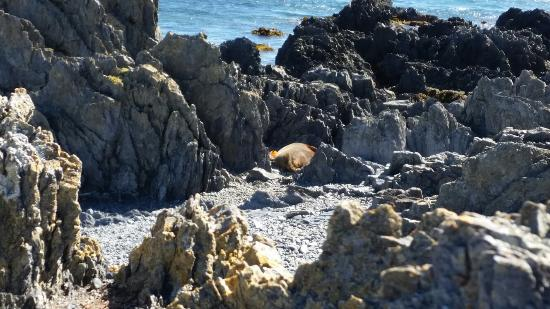 Seal Coast Safari : They just wanted to sit in the sun