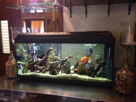 L'Oro di Siena: Bellissimo aquario