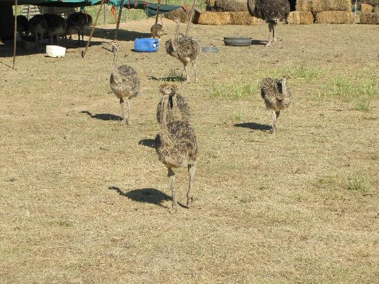 La Plume: The ostrich farm tour with Bartel