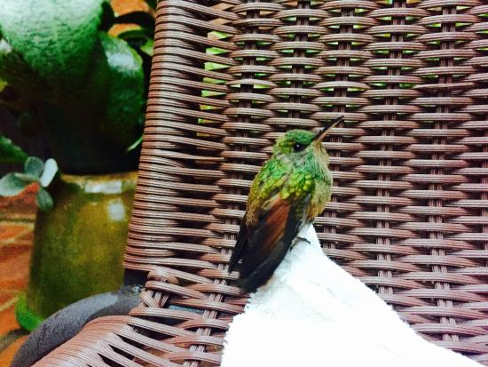 Hostal Casa del Sol Oaxaca: A beautiful hummingbird in the courtyard.