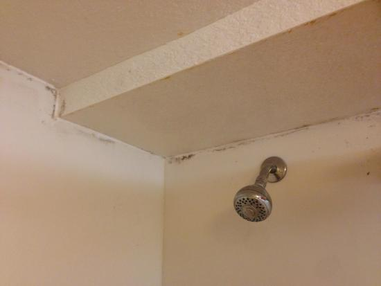 La Quinta Inn & Suites Lakeland West: mould in shower