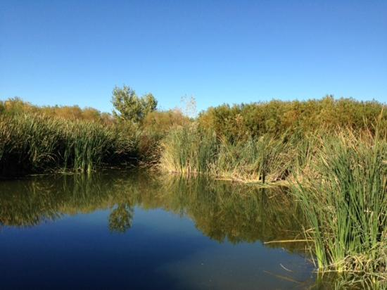 Clark County Wetlands Park